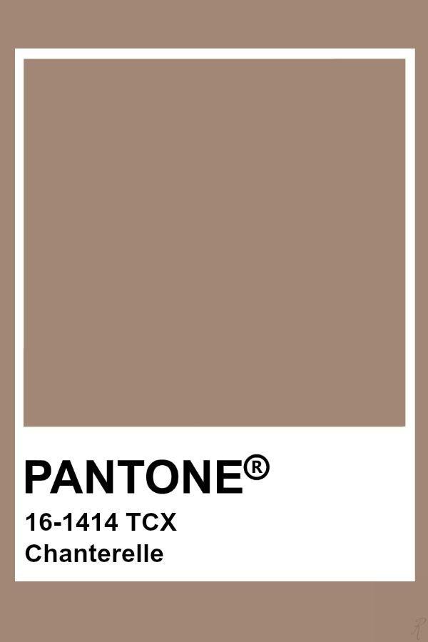 Pantone Chanterelle Pantone Colour Palettes Pantone Color Pantone Palette