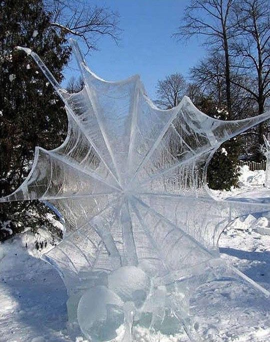 Frozen Spider Web (Is that thing on the bottom a frozen spider?)