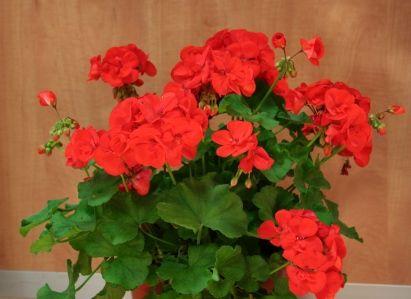 Plantas resistentes al sol plantas resistentes pinterest - Plantas de exterior resistentes al calor ...