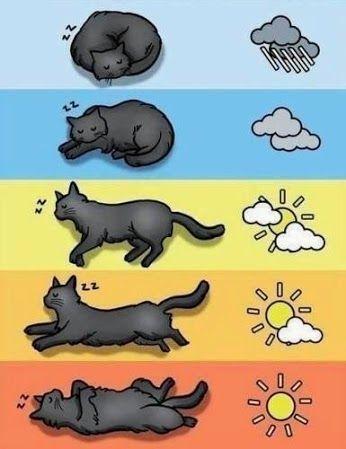 Das Wetter mit Hilfe von Katzen bestimmen