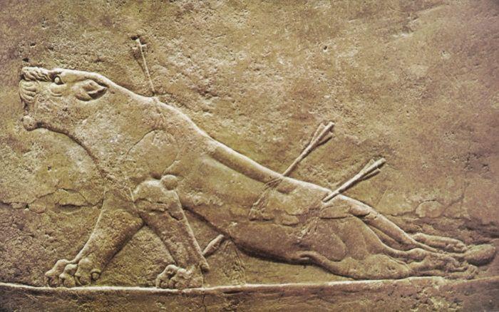 płaskorzeźba Zraniona Lwica – pałac Assurbanipala w Niniwie