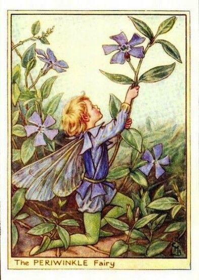 Periwinkle Flower Fairy Vintage Print by Cicely Mary Barker, first published in London by Blackie, 1944 in Flower Fairies of the Garden. Also called Vinca.