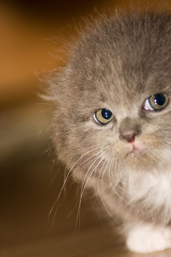 """This kitteh's name IS """"WiFi."""" But where does the card go? Do we even want to know?"""