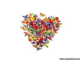 butterfly - Szukaj w Google