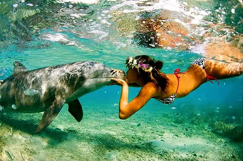 • Swim with dolphins.