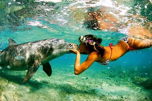 • Swim with dolphins.