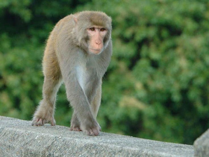 Bir Motibagh Wildlife Sanctuary - in Punjab, India