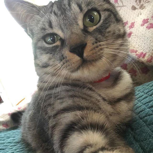 なんだかにんげんのみんニャは ごーるでんうぃーくってのがきたらしいニャ おでかけのみなさんたのしんでニャ〜😸 すずはいつものとおり ごはんたべてたくさんあそんで おひるねするニャよ😽 . #我が家は通常運転です #GWも旦那は仕事 #すず#ねこ#ネコ#猫#子猫#こねこ#おてんばこねこ#おてんばすず#愛猫#大切な家族#instacat #cat#catstagram#neko#animal #family #love #kitty #kitten #suzu#고양이#새끼고양이#가족#사랑#みんねこ#picneko#ピクネコ#ペコねこ部