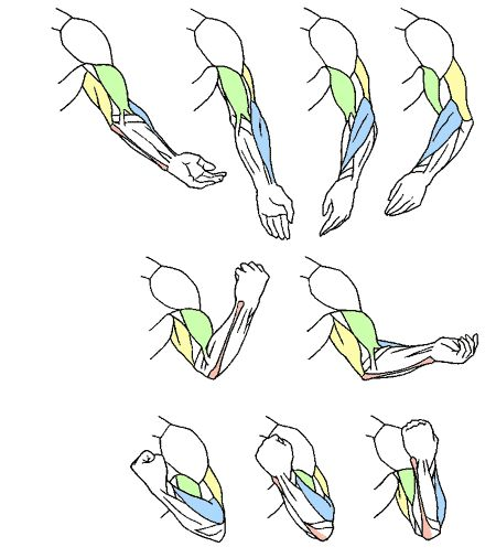 Art references and Resources, eyecaging: These seem like great exercises. I...