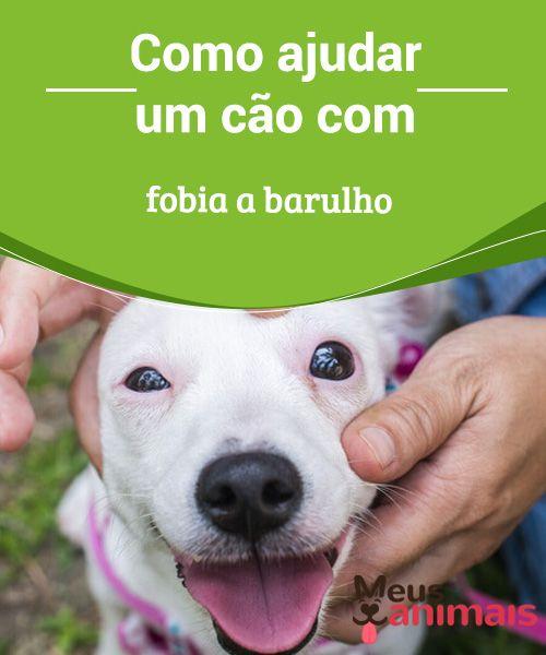 Fobia a barulho, como ajudar o seu peludo a superá-la  Um #cão com #fobia a #barulho pode ficar nervoso e até acelerar o #coração. Isso poderá trazer grandes prejuízos para a #saúde do peludo, com o tempo. #Conselhos