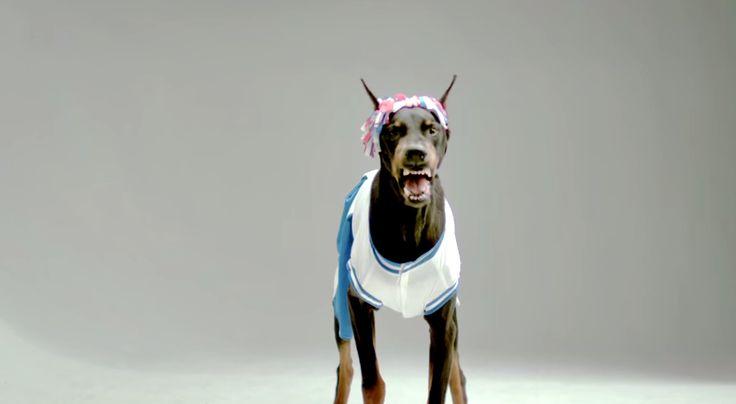 """El video """"Angry Dogs in Cute Costumes"""" nos muestra que aunque algunos perros usen ridículos disfraces, eso no les quita lo feroz."""