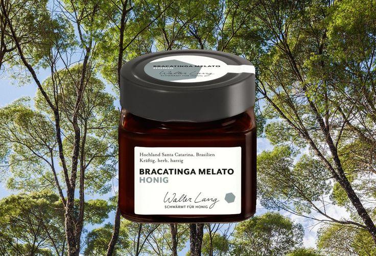 Bracatinga Melato Honig aus Brasilien- Walter Lang Honig