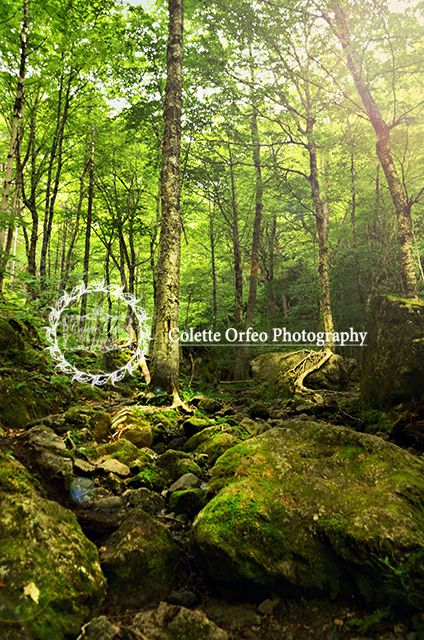 Fairytale Forest Photography Backdrop. Perfect for your fairytale images, taken at Uisge Ban Falls Trail, NS. To order backdrop visit www.backdropscanada.ca