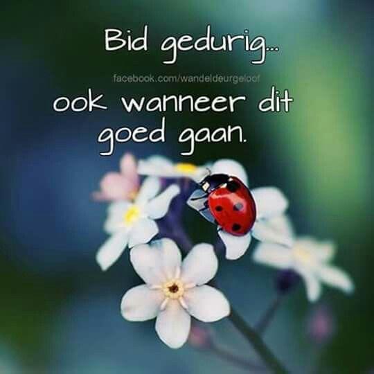 Bid gedurig... #Afrikaans #Prayer