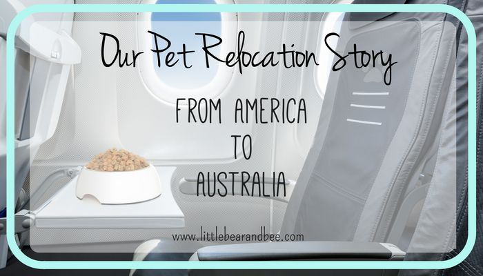 Relocation to Australia from America with pets. Here is what you need to know. http://littlebearandbee.com/pet-relocation-story-america-australia/