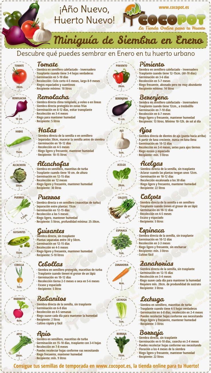 Qué sembrar en Enero? Tomates, remolacha, alcachofas, habas, puerro, guisantes, cebolla, rábanos, apio, pimiento, berenjena, ajos, acelga, espinaca, zanahorias, lechuga, borraja.