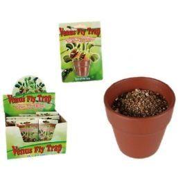 Plante carnivore – Dionée attrape-mouche – Tue mouche insolite et magique: Terminé les mouches et autres insectes volants : votre plante…