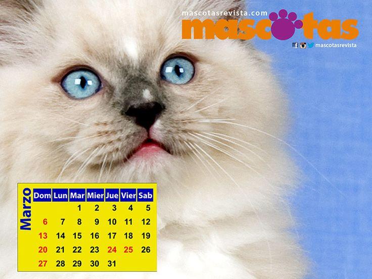 Calendario de Marzo 2016 - Mascotas Revista