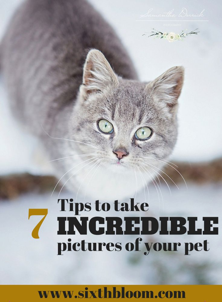 7 Tips to take Incredible Pictures of your Pet, Pet Photography, Pet Pictures