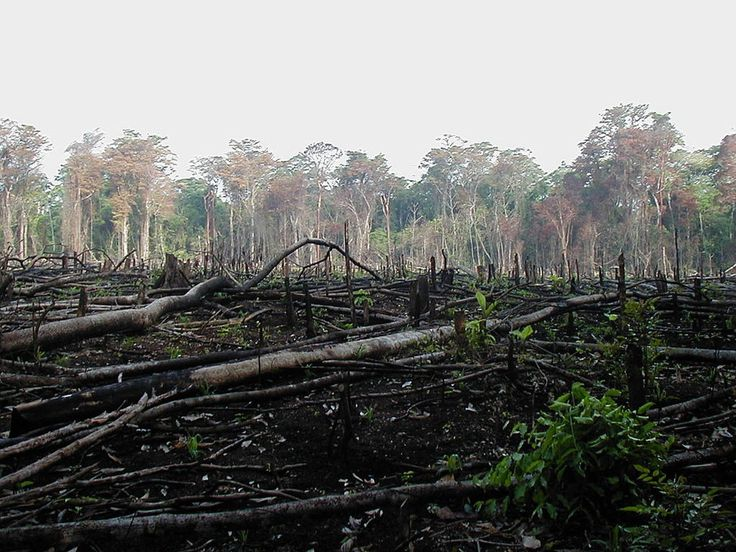 The Amazon rainforest has been facing severe deforestation problems for several decades -- it has lost about a fifth of its forest in the past three. While there are many causes, one of the main causes is cattle ranching, particularly in Brazil.