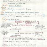 il+framework+e+la+centralità+del+testo
