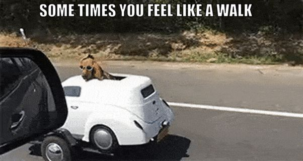 21+ HILARIOUS DOG PICS WITH CAPTIONS YOU HAVE TO SEE http://omgshots.com/3746-21-hilarious-dog-pics-with-captions-you-have-to-see.html