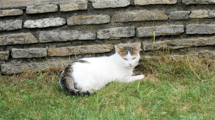 cute cat @ Nyíregyháza, Hungary