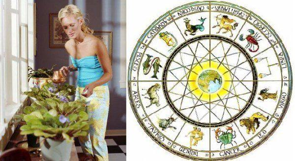Выбираем комнатные цветы по знаку Зодиака - Дизайн интерьера - интерьер дома, фен-шуй, дома знаменитостей, ремонт - IVONA - bigmir)net - IVONA bigmir)net