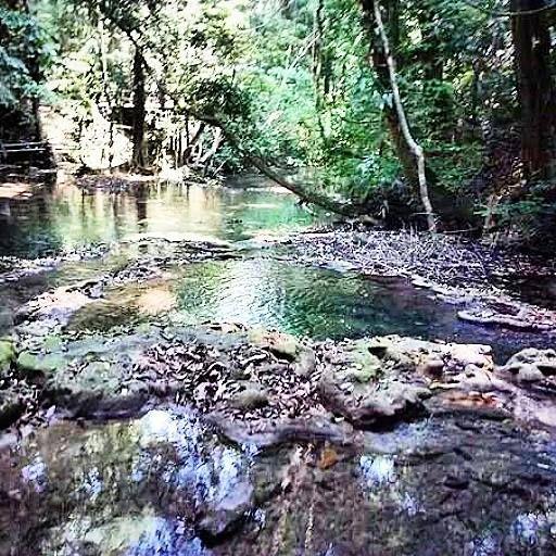 Flora de las Ruinas de Palenque