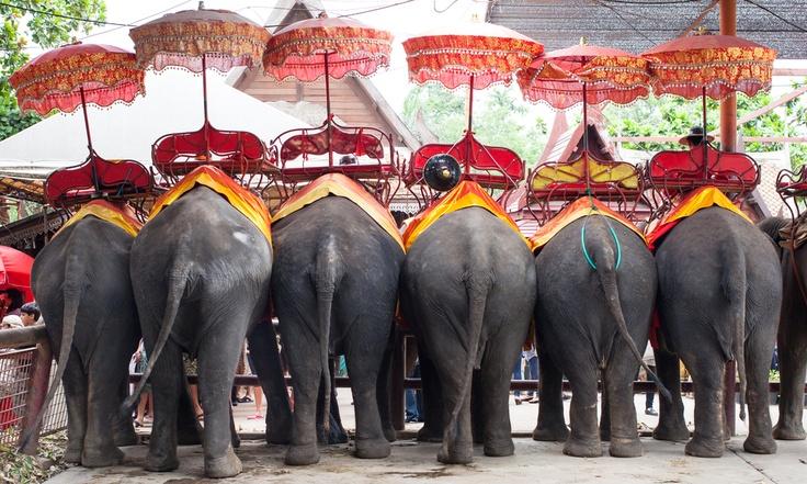Elefantes tailandeses. Apúntate a los circuitos Viajamus para #viajar a #Tailandia.
