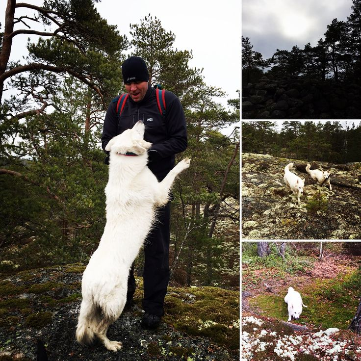 Hiking in Villivuori #naantali Wilma, Sona and Karkki #whiteshepherd #LabradorRetriever