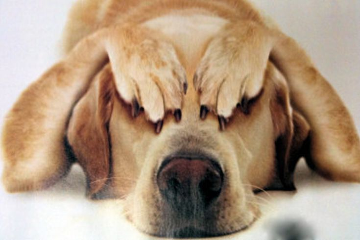 σκύλος κροτοφοβία Πάσχα