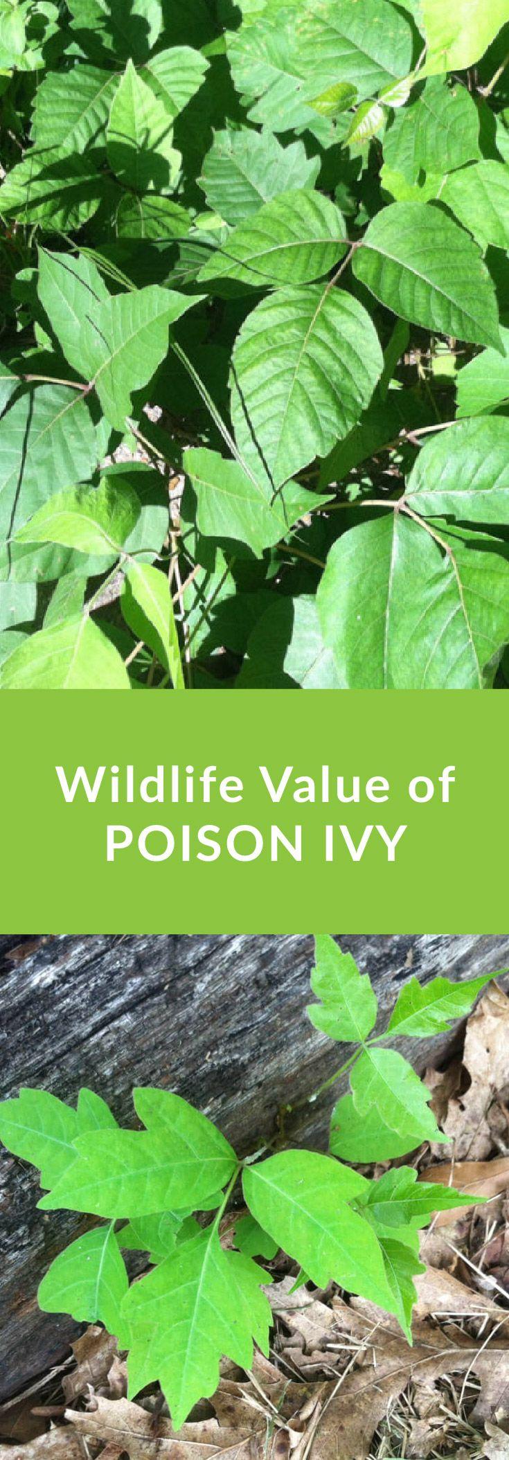 34 best mississippi native plants images on pinterest