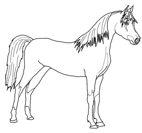 Arabian Horse coloring page from Horses category. Select
