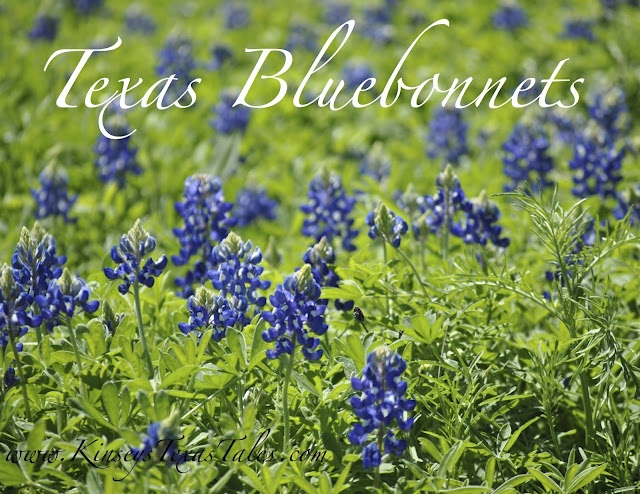 Ahhh, spring time in Texas when the bluebonnets are strewn all along the roadways.  Favorite time of year in Central Texas.Spring Time, Favorite Places, Life 2010 2011 2012, Favorite Time, Austin Texas, Texas Life, Central Texas, Absolute Beautiful, Time In