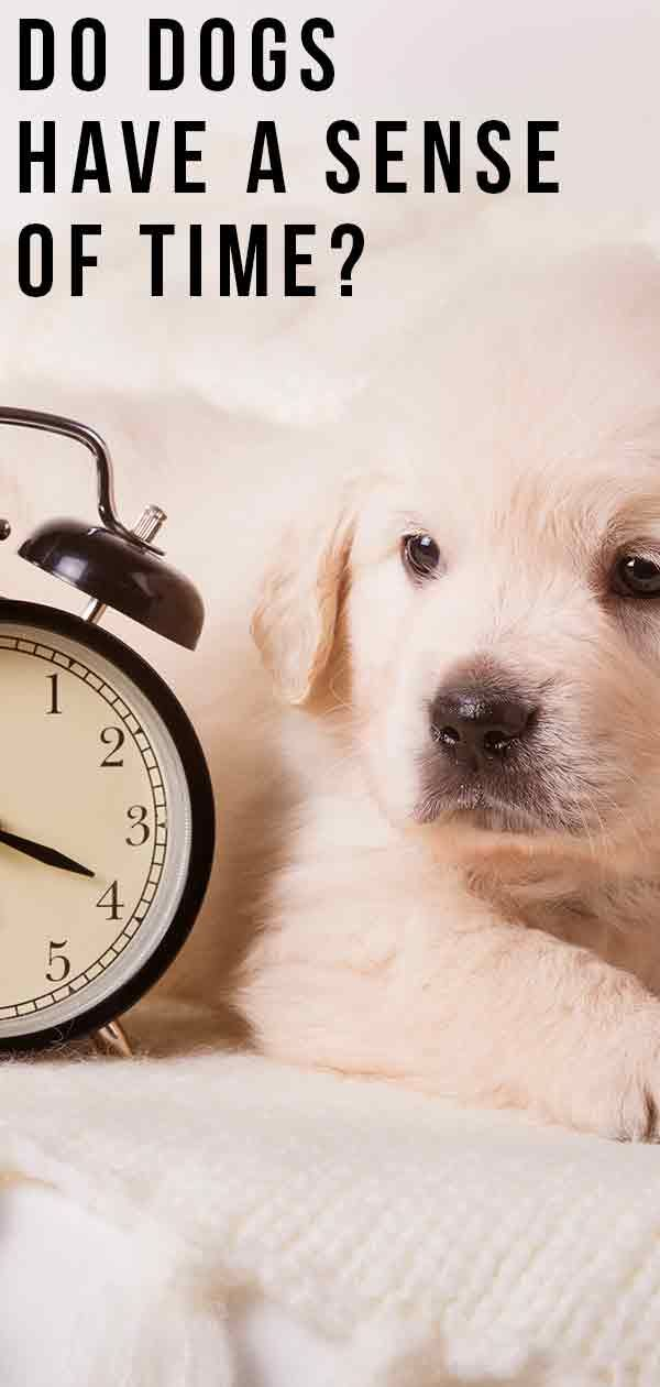 Do Dogs Have A Sense Of Time Fun Facts About Dogs Dogs Dog