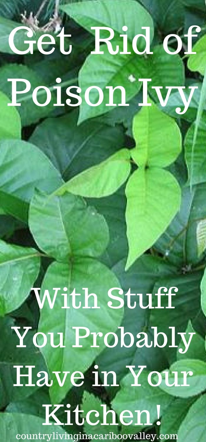 Kill poison ivy with these ingredients found in most kitchens!