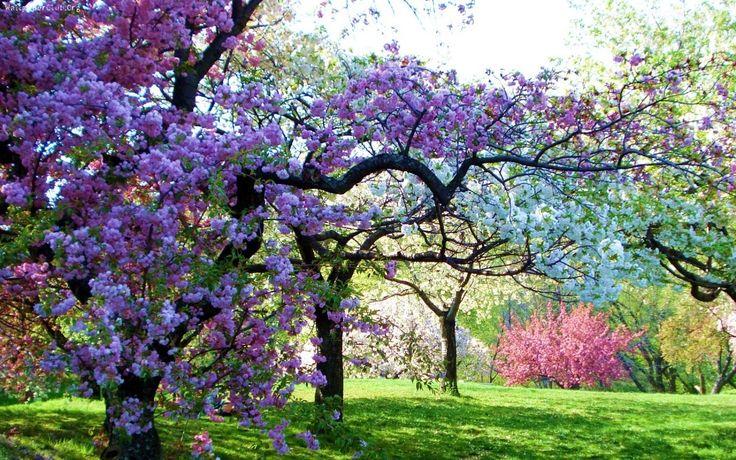Wiosna, Drzewa Owocowe, Sad