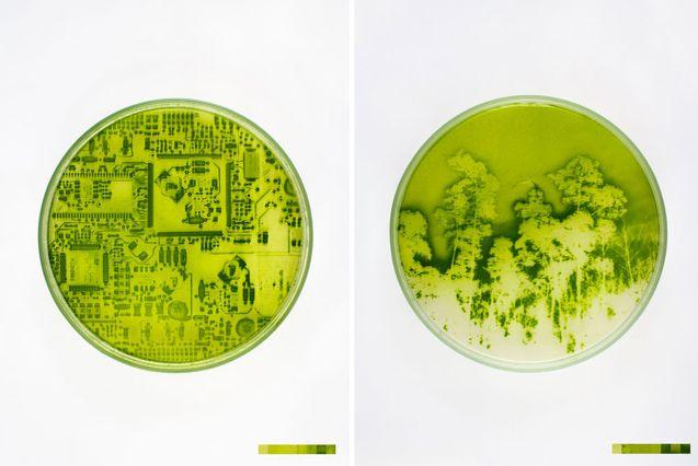 """Algae-graphy."" by french artist Lia Giraud  Landscape Photos ""Grown"" On Light-Sensitive Algae  Using microalgae, she develops images on the light-sensitive organisms that she describes as ""small sensors in motion."""