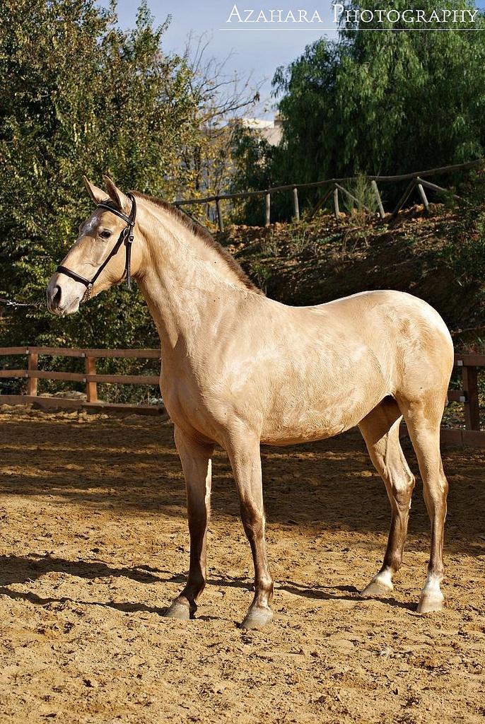 Rare Horse Coats 74 best Equine Color: ...