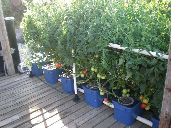 hydroponics undercurrent system