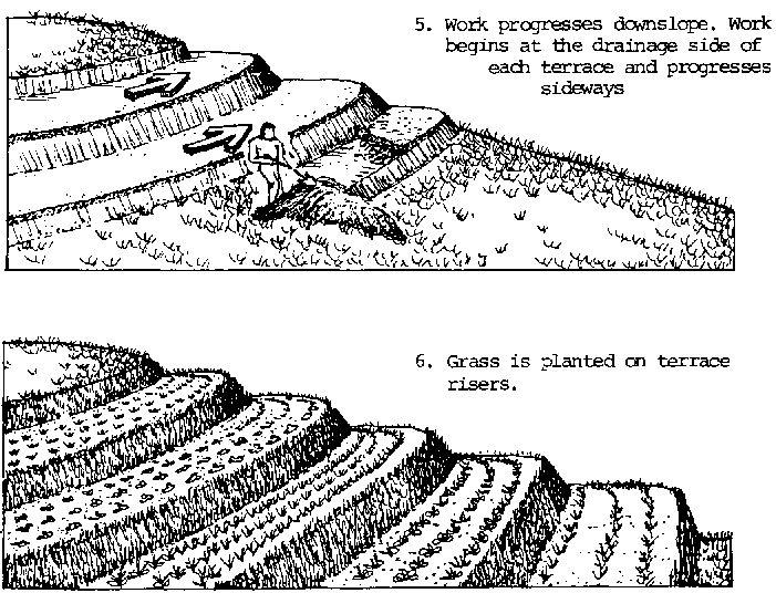 Best 25 soil conservation ideas on pinterest soil and for Terrace farming diagram