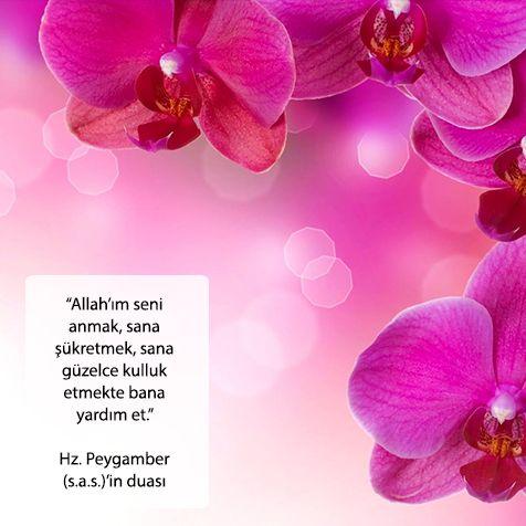Allah'ım seni anmak, sana şükretmek, sana güzelce kulluk etmekte bana yardım et. Hz. Peygamber (s.a.s.)'in duası