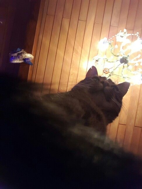 Kimi took a selfie