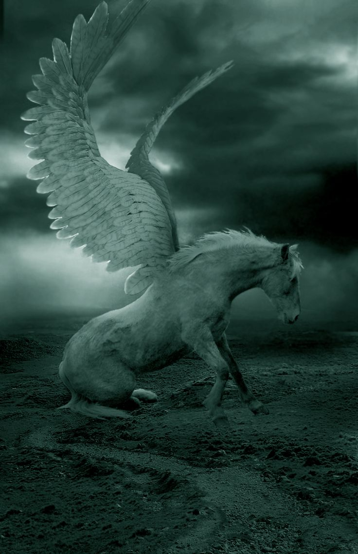 best 25 pegasus ideas on pinterest winged horse greek mythical