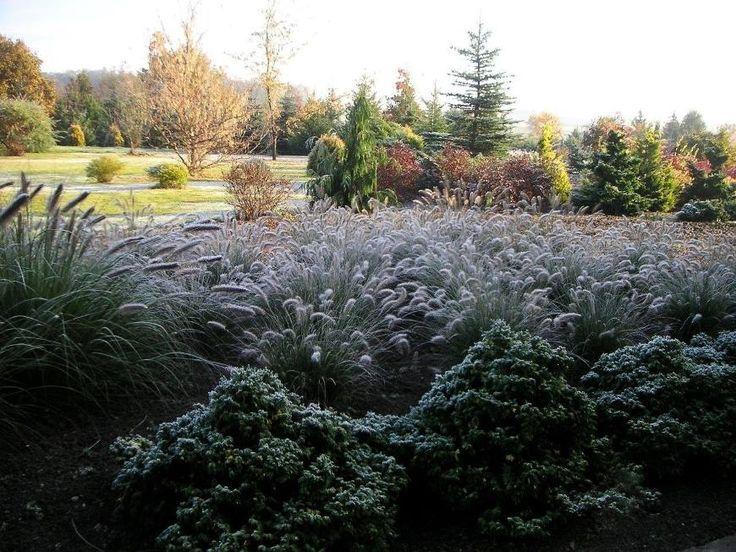 Arboretum w Trojanowie