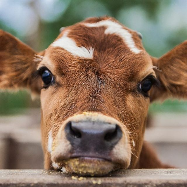 "43.2k Likes, 533 Comments - Country Living (@countrylivingmag) on Instagram: ""What are you looking at?!  #CLpets #farmlife #animalgram"""