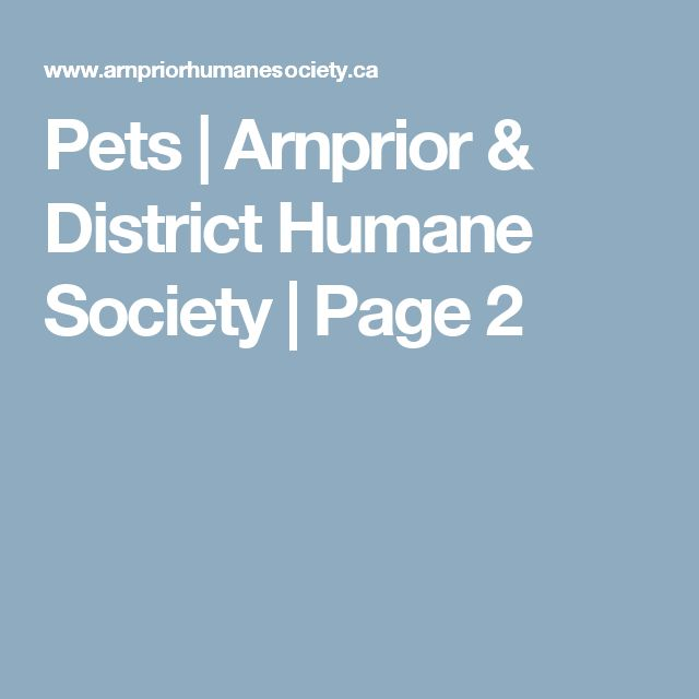 Pets | Arnprior & District Humane Society | Page 2