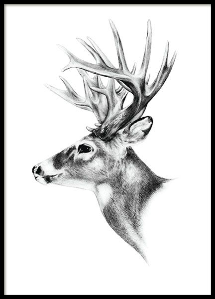 Black feather - 50x70Deer black and white - 50x70...