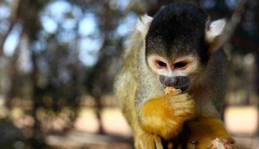 Monkey Town